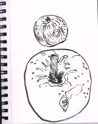 applesketch