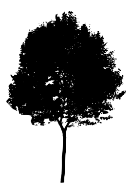 15116-illustration-of-a-tree-silhouette-pv